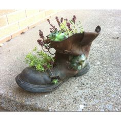 My husbands old work boot. Succulents look so cute in them!! I'm trying so cowboy boots next!