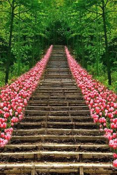 Steps and tulips.