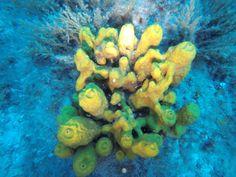 http://divingpag.com/#kontakt  Nie widziałeś jeszcze koralowców na żywo? A może chcesz poznać życie morskich ślimaków? Nurkowanie w Chorwacji jest fascynujące i piękne za razem! Jeśli też chciałbyś nauczyć się nurkować w Chorwacji - zapraszamy na Wyspę PAG! :) ;)