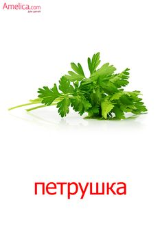 Russian Language Learning, Beach Quotes, School Notes, Fruits And Vegetables, Beautiful Birds, Herbs, Education, Plants, Recipes
