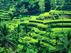 Bali terraces in Bali. Let's go to Bali and enjoy fantastic tropical paradise… Places Around The World, Travel Around The World, Around The Worlds, Cinque Terre Italia, Places To Travel, Places To See, Beautiful World, Beautiful Places, Voyage Bali
