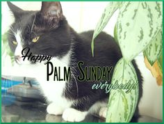 Symphonicats: 97. Palm Sunday sunshine! ✿ Read about Emi's mischief and the beautiful sunshine shining on the kitties' lives! #cats #blogging