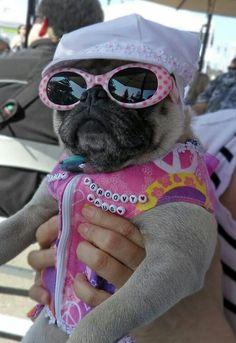 groovy pug