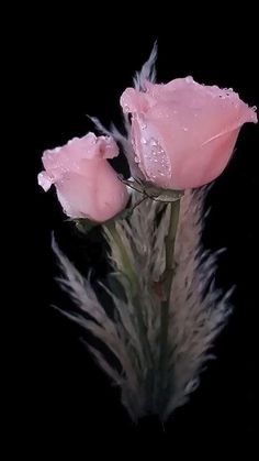 Rose Flower Pictures, Beautiful Flowers Pictures, Beautiful Flowers Wallpapers, Beautiful Photos Of Nature, Beautiful Flowers Garden, Beautiful Nature Wallpaper, Flowers Nature, Pretty Flowers, Glitter Phone Wallpaper