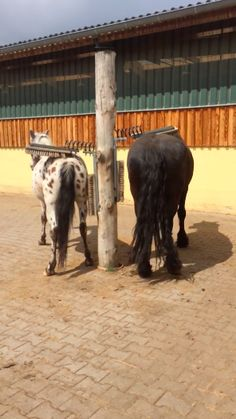 """Scratch your own back, why don't ya! We've all heard the adage, """"You scratch my back, I'll scratch yours. Horse Paddock, Horse Arena, Miniature Horse Barn, Mini Horse Barn, Toys For Horses, Horse Barn Designs, Horse Shelter, Horse Barn Plans, Horse Fencing"""