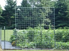 Super, sturdy vegetable trellis for beans, squash, melons and more!