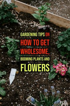 Get The Best From Your Garden With These Tips  -- More info could be found at the image url.