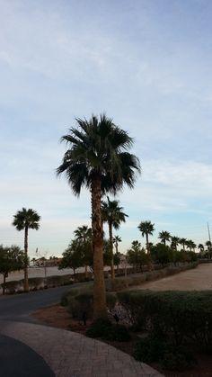 Dec. 18, 2014- I made it to Vegas for Christmas!
