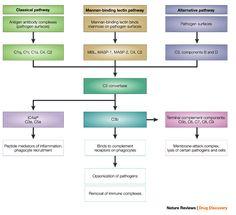 Info om: Komplementsystemet og inflammasjoner