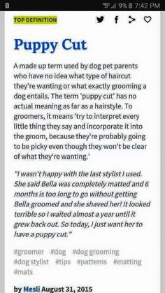 "I freaking hate ""puppy cut"" like where the heck did it come from? So freakin irritating 😠. Dog Grooming Hacks For Groomers Dog Grooming Styles, Dog Grooming Shop, Dog Grooming Salons, Creative Grooming, Dog Spa, Puppy Cut, Dog Nails, Dog Daycare, Puppies"