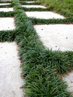 Dwarf Mondo grass in between pavers in the front courtyard. Add additional Mondo grass to existing plants Simple Garden Designs, Garden Design Plans, Landscaping Plants, Front Yard Landscaping, Landscaping Ideas, Lawn And Garden, Garden Paths, Garden Edging, Dwarf Mondo Grass