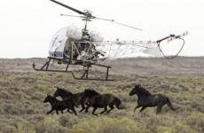PBS Interviews Ginger Kathrens, Emmy Award-Winning Filmmaker | American Wild Horse Preservation Campaign