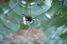 Käferfang (er wurde gerettet!)