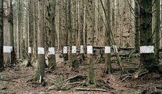 Chris Engman, Landscape for Benjamin (trees) , 2005