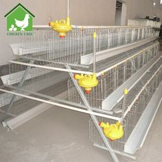 poultry chicken cages New Design egg laying cages for poultry farm Cheap Chicken Coops, Portable Chicken Coop, Chicken Cages, Best Chicken Coop, Building A Chicken Coop, Chicken Feeders, Chicken Wire, Best Egg Laying Chickens, Keeping Chickens