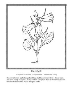 coloring pages for kids wild flowers | bright-lilac-lupine-flower-branch-isolated-white ...