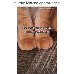 Funny Animals, Cute Animals, Cat Store, Cat Hair, Cute Cats And Kittens, Animals Beautiful, Mittens, Respect, Puppies