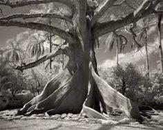 """Résultat de recherche d'images pour """"beth moon ancient trees"""""""
