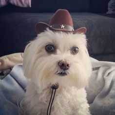 Toby LittleDude wants to know if someone will get him a horse too!