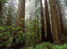 Image result for North American Forests
