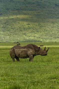 ンゴロンゴロ(Ngorongoro)