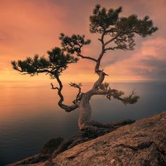 Tree of life Tree Photography, Landscape Photography, Beautiful Places, Beautiful Pictures, Unique Trees, Natural Scenery, Tree Forest, Tree Art, Nature Pictures