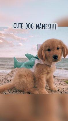Cute dog names!!!!