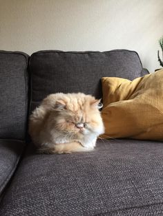 my favorite loaf Kittens Cutest, Cats And Kittens, Cute Cats, Funny Cats, Kitty Cats, Spotted Cat, Orange Cats, Maine Coon Cats, Nature Animals