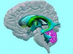 Neuro-excellent tutorial of brain structure.