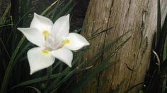 Flores que te sorprenden