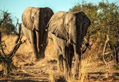 Unterkunft in Simbabwe: The Elephant Camp – neben Elefanten übernachten