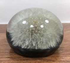 Dandelion In Lucite Tarax Infinity Products Hand Crafted Paperweight Dome  | eBay