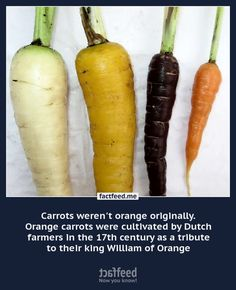 Carrots werent orange originally. Orange carrots were cultivated in the century by Dutch farmers. Container Gardening, Gardening Tips, Yard Design, Urban Farming, Grow Your Own, Dream Garden, Garden Projects, Food For Thought