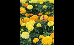 Quotation Blog Tumblr, Quotations, Mustard, Painting, Art, Art Background, Painting Art, Kunst, Paintings
