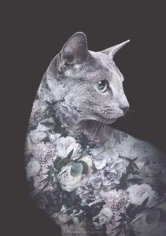 Faunascapes Flower Portrait Silver Cat
