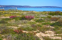 """""""To add the the floral displays, at Laaiplek. West Coast, Cape, Display, Mountains, Twitter, Floral, Nature, Plants, Travel"""