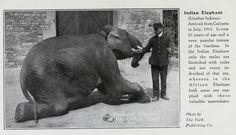 Bristol Zoo.