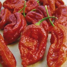 Worlds Hottest Pepper! King Chilli Dry Bhut Jolokia Shop here: http://www.shoppemall.com/KingchillidryBhutJolokia-61245