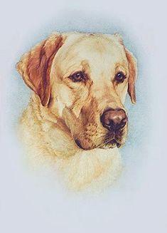 Artist Megan Burford - Labrador Retriever painting