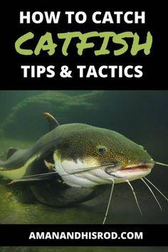 Blue Catfish, Catfish Bait, Catfish Fishing, Cat Fishing, Fishing Rigs, How To Catch Catfish, Channel Catfish, Braided Line