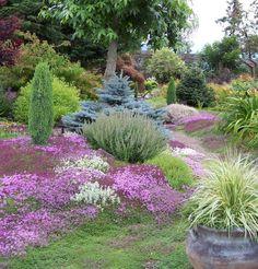 Back Gardens, Outdoor Gardens, Plant Design, Garden Design, Amazing Gardens, Beautiful Gardens, Farm Pictures, Landscaping Plants, Landscaping Ideas