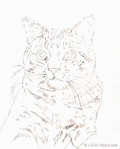 Learn how to draw a beautiful realistic cat colored pencil, step by step, with…