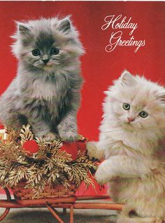 Christmas Kittens vintage card ...