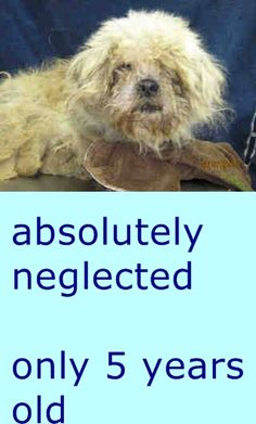 #A4813560 'm an approximately 5 year old male shih tzu. I am not yet neutered. I have been at the Carson Animal Care Center since March 31, 2015. I will be available on April 11, 2015. You can visit me at my temporary home at C410. https://www.facebook.com/171850219654287/photos/pb.171850219654287.-2207520000.1427849331./391350994370874/?type=3&theater Carson Shelter, Gardena, California
