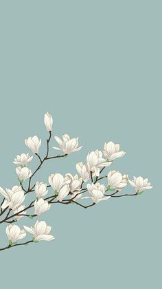 white flowers with green background. cute white flowers with green background. Flower Wallpaper, Screen Wallpaper, Mobile Wallpaper, Wallpaper Backgrounds, Cherry Blossom Wallpaper Iphone, Plant Wallpaper, Wallpaper Designs, Emoji Wallpaper, Dark Wallpaper
