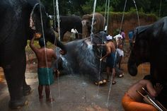 Temple Elephants Find Friends and Care at This Retreat in India