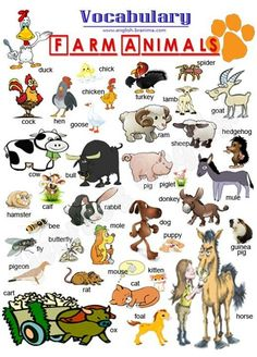 EwR.Poster #English Vocabulary - Farm animals