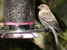 Tips for effectively cleaning bird feeders to attract more birds and minimize diseases.
