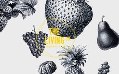 The living co identity