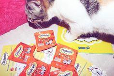 Na semana passada recebi cá em casa uma caixinha repleta de biscoitinhos para os gatinhos. Mais uma vez , em parceria com a Youzz, ... My Emma, Blog, Animals, Home, Gatos, Animales, Animaux, Animais, Animal